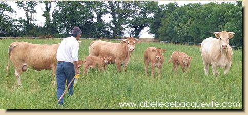 vente viande bovine en direct en vendee vendre chez le producteur la ferme. Black Bedroom Furniture Sets. Home Design Ideas